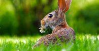 conejo cruelty free