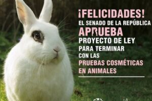 Noticias de última hora: México prohíbe la experimentación en animales para los cosméticos